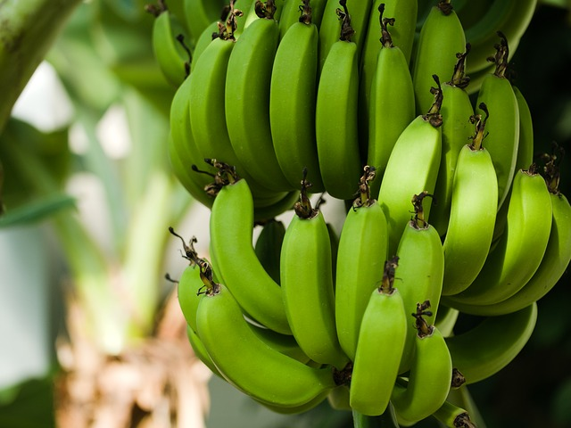 biomassa de banana verde é low carb